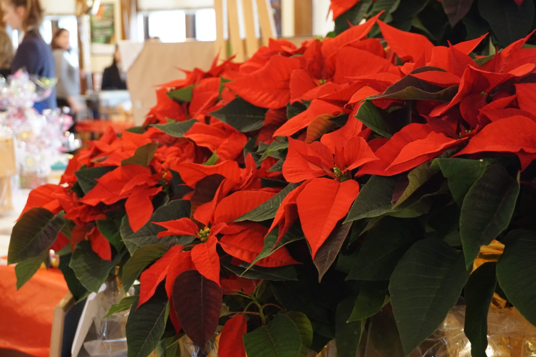 PG Poinsettia Sales 2020